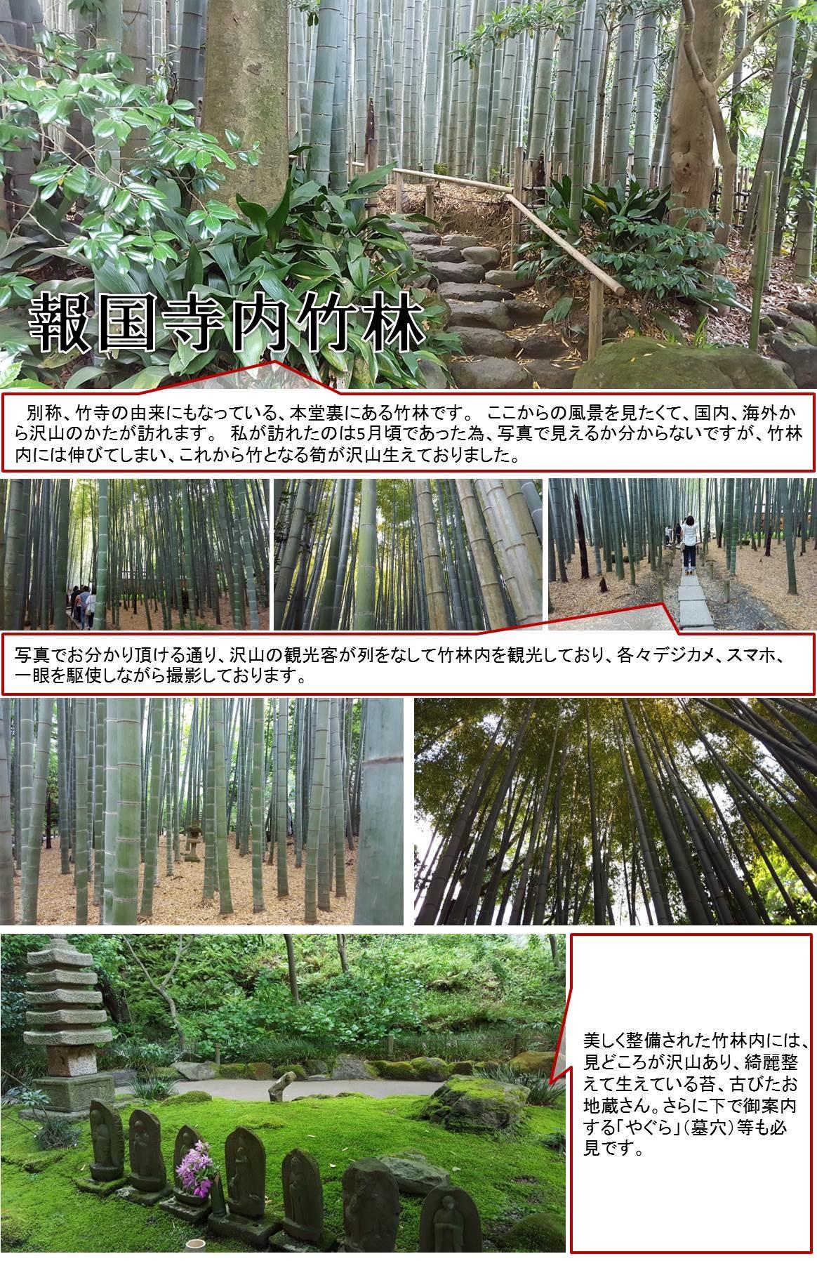 別称、竹寺の由来にもなっている、本堂裏にある竹林です。 ここからの風景を見たくて、国内、海外から沢山のかたが訪れます。 私が訪れたのは5月頃であった為、写真で見えるか分からないですが、竹林内には伸びてしまい、これから竹となる筍が沢山生えておりました。  写真でお分かり頂ける通り、沢山の観光客が列をなして竹林内を観光しており、各々デジカメ、スマホ、一眼を駆使しながら撮影しております。美しく整備された竹林内には、見どころが沢山あり、綺麗整えて生えている苔、古びたお地蔵さん。さらに下で御案内する「やぐら」(墓穴)等も必見です。
