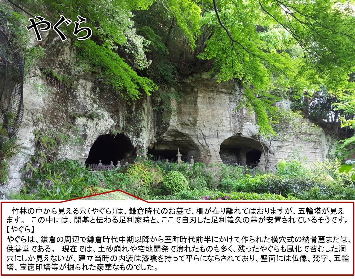 竹林の中から見える穴(やぐら)は、鎌倉時代のお墓で、柵が在り離れてはおりますが、五輪塔が見えます。 この中には、開基と伝わる足利家時と、ここで自刃した足利義久の墓が安置されているそうです。  【やぐら】  やぐらは、鎌倉の周辺で鎌倉時代中期以降から室町時代前半にかけて作られた横穴式の納骨窟または、供養堂である。 現在では、土砂崩れや宅地開発で潰れたものも多く、残ったやぐらも風化で苔むした洞穴にしか見えないが、建立当時の内装は漆喰を持って平らにならされており、壁面には仏像、梵字、五輪塔、宝篋印塔等が掘られた豪華なものでした。
