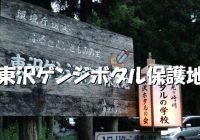 """大自然残る山形で観れるホタルの一大鑑賞地""""東沢ゲンジボタル保護地""""へ潜入調査!"""