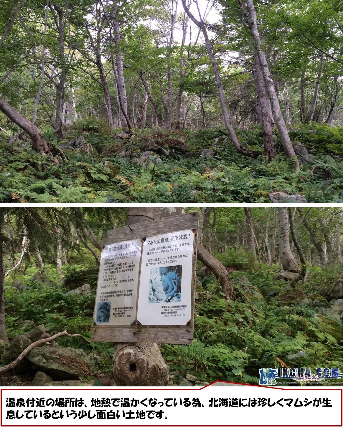 温泉付近の場所は、地熱で温かくなっている為、北海道には珍しくマムシが生息しているという少し面白い土地です。