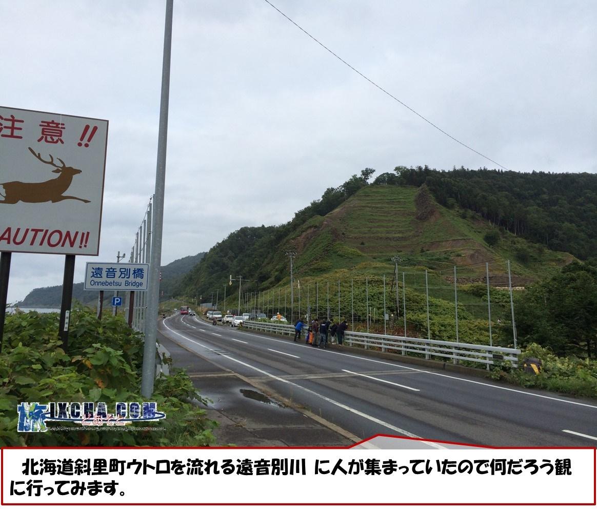 北海道斜里町ウトロを流れる遠音別川 に人が集まっていたので何だろう観に行ってみます。