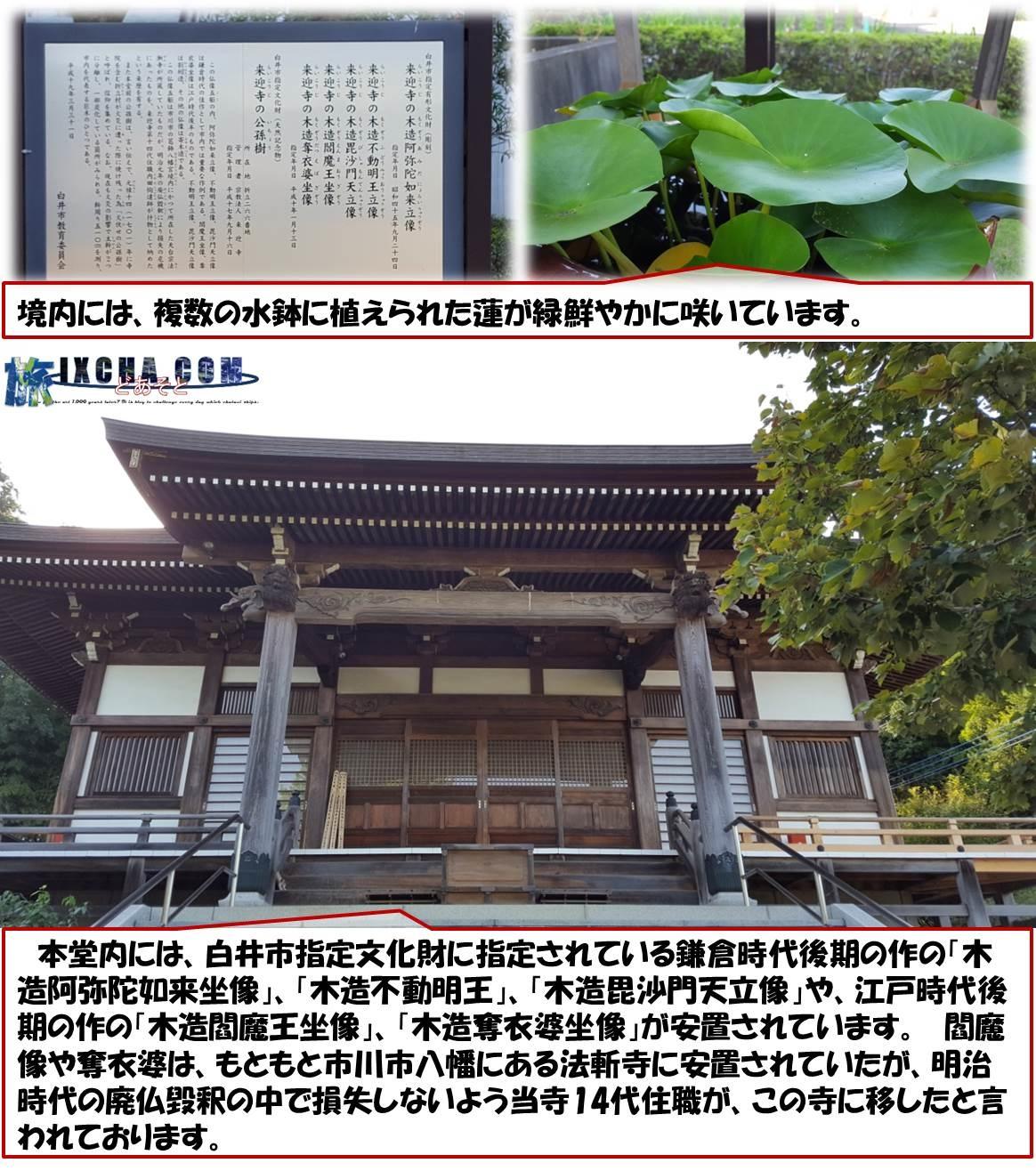 境内には、複数の水鉢に植えられた蓮が緑鮮やかに咲いています。 本堂内には、白井市指定文化財に指定されている鎌倉時代後期の作の「木造阿弥陀如来坐像」、「木造不動明王」、「木造毘沙門天立像」や、江戸時代後期の作の「木造閻魔王坐像」、「木造奪衣婆坐像」が安置されています。 閻魔像や奪衣婆は、もともと市川市八幡にある法斬寺に安置されていたが、明治時代の廃仏毀釈の中で損失しないよう当寺14代住職が、この寺に移したと言われております。
