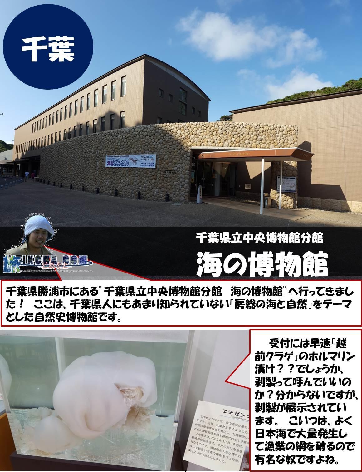 """千葉県立中央博物館分館 海の博物館 千葉県勝浦市にある""""千葉県立中央博物館分館 海の博物館""""へ行ってきました! ここは、千葉県人にもあまり知られていない「房総の海と自然」をテーマとした自然史博物館です。 受付には早速「越前クラゲ」のホルマリン漬け??でしょうか、剥製って呼んでいいのか?分からないですが、剥製が展示されています。 こいつは、よく日本海で大量発生して漁業の網を破るので有名な奴ですよね。"""