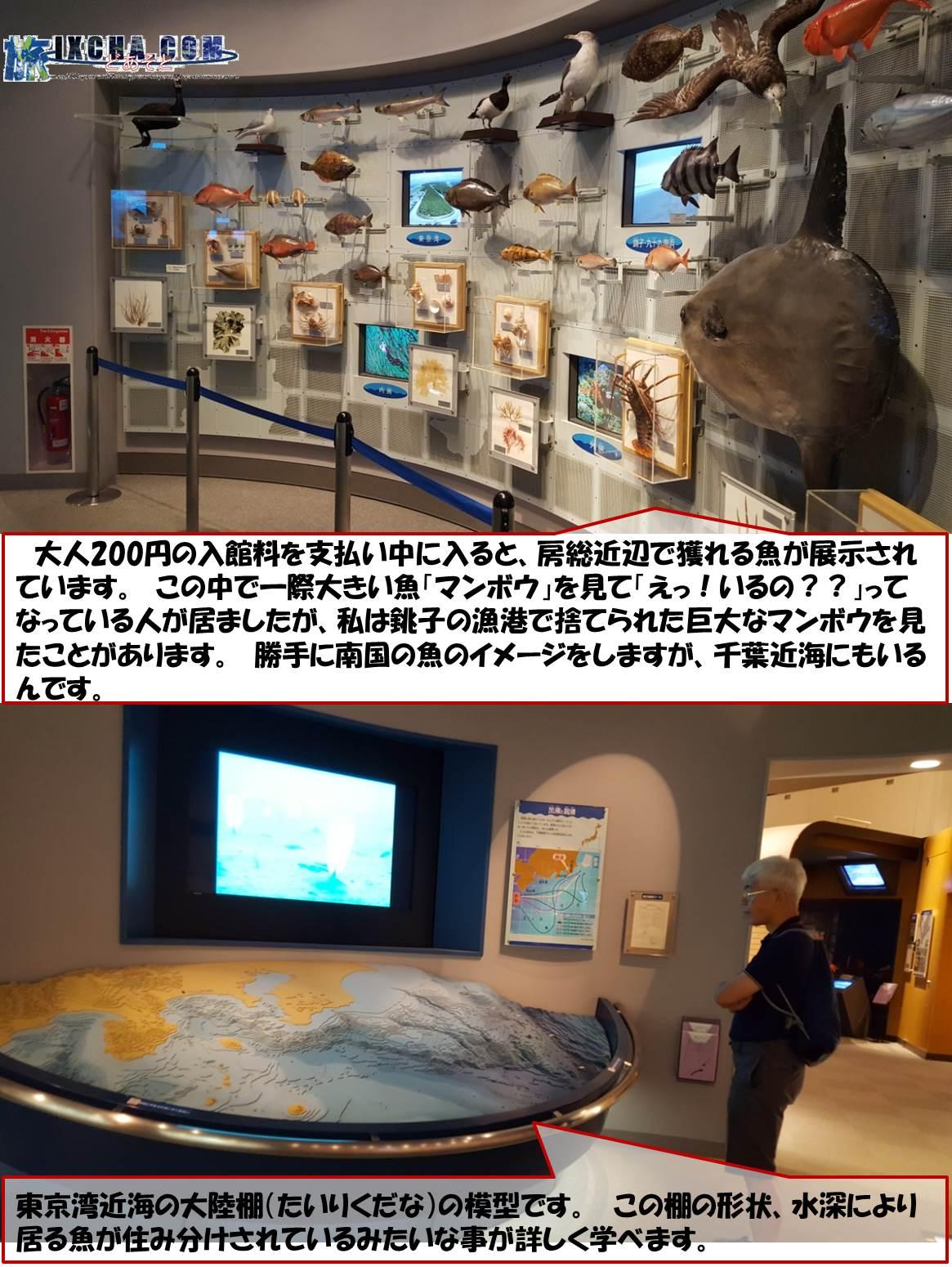 大人200円の入館料を支払い中に入ると、房総近辺で獲れる魚が展示されています。 この中で一際大きい魚「マンボウ」を見て「えっ!いるの??」ってなっている人が居ましたが、私は銚子の漁港で捨てられた巨大なマンボウを見たことがあります。 勝手に南国の魚のイメージをしますが、千葉近海にもいるんです。 東京湾近海の大陸棚(たいりくだな)の模型です。 この棚の形状、水深により居る魚が住み分けされているみたいな事が詳しく学べます。