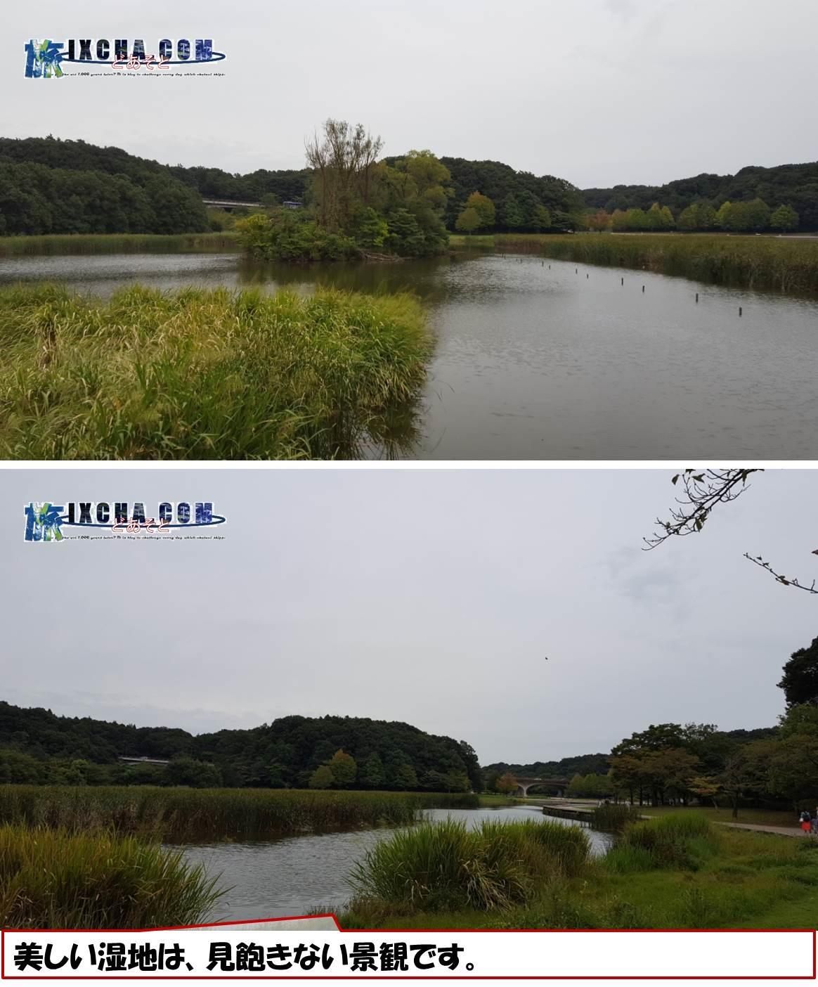 美しい湿地は、見飽きない景観です。