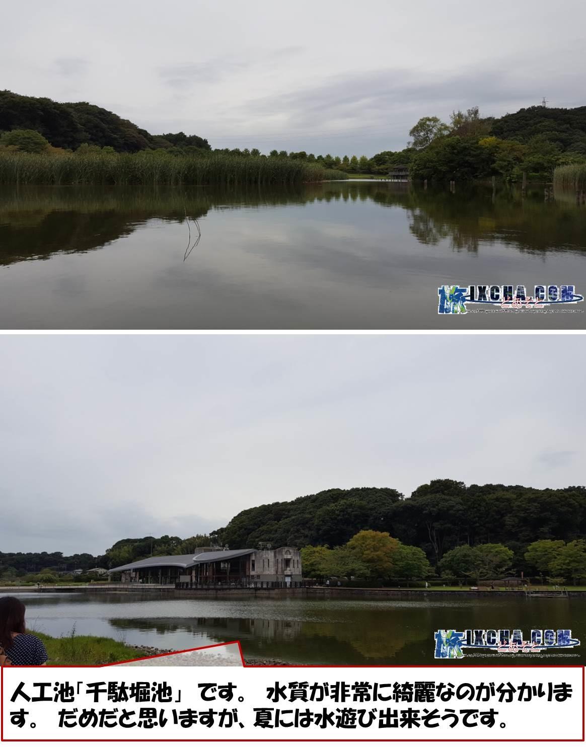 人工池「千駄堀池」 です。 水質が非常に綺麗なのが分かります。 だめだと思いますが、夏には水遊び出来そうです。