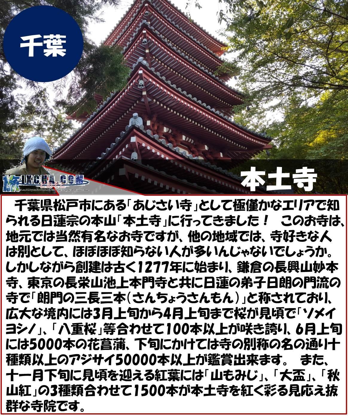 千葉 本土寺 千葉県松戸市にある「あじさい寺」として極僅かなエリアで知られる日蓮宗の本山「本土寺」に行ってきました! このお寺は、地元では当然有名なお寺ですが、他の地域では、寺好きな人は別として、ほぼほぼ知らない人が多いんじゃないでしょうか。 しかしながら創建は古く1277年に始まり、鎌倉の長興山妙本寺、東京の長栄山池上本門寺と共に日蓮の弟子日朗の門流の寺で「朗門の三長三本(さんちょうさんもん)」と称されており、広大な境内には3月上旬から4月上旬まで桜が見頃で「ソメイヨシノ」、「八重桜」等合わせて100本以上が咲き誇り、6月上旬には5000本の花菖蒲、下旬にかけては寺の別称の名の通り十種類以上のアジサイ50000本以上が鑑賞出来ます。 また、十一月下旬に見頃を迎える紅葉には「山もみじ」、「大盃」、「秋山紅」の3種類合わせて1500本が本土寺を紅く彩る見応え抜群な寺院です。