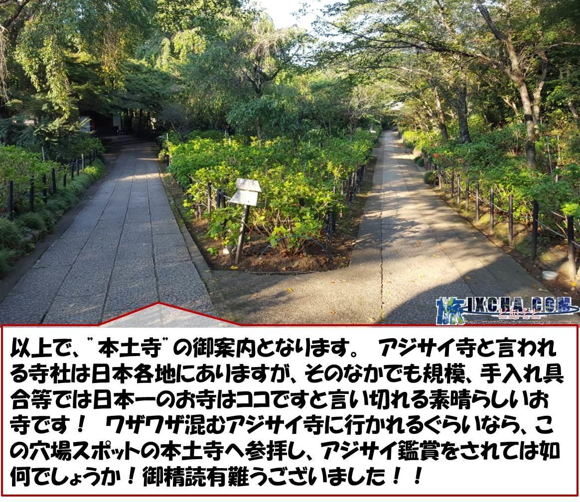 """以上で、""""本土寺""""の御案内となります。 アジサイ寺と言われる寺社は日本各地にありますが、そのなかでも規模、手入れ具合等では日本一のお寺はココですと言い切れる素晴らしいお寺です! ワザワザ混むアジサイ寺に行かれるぐらいなら、この穴場スポットの本土寺へ参拝し、アジサイ鑑賞をされては如何でしょうか!御精読有難うございました!!"""