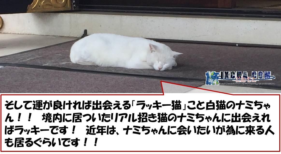 そして運が良ければ出会える「ラッキー猫」こと白猫のナミちゃん!! 境内に居ついたリアル招き猫のナミちゃんに出会えればラッキーです! 近年は、ナミちゃんに会いたいが為に来る人も居るぐらいです!!
