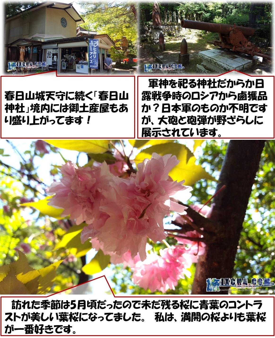 春日山城天守に続く「春日山神社」境内には御土産屋もあり盛り上がってます! 軍神を祀る神社だからか日露戦争時のロシアから鹵獲品か?日本軍のものか不明ですが、大砲と砲弾が野ざらしに展示されています。 訪れた季節は5月頃だったので未だ残る桜に青葉のコントラストが美しい葉桜になってました。 私は、満開の桜よりも葉桜が一番好きです。