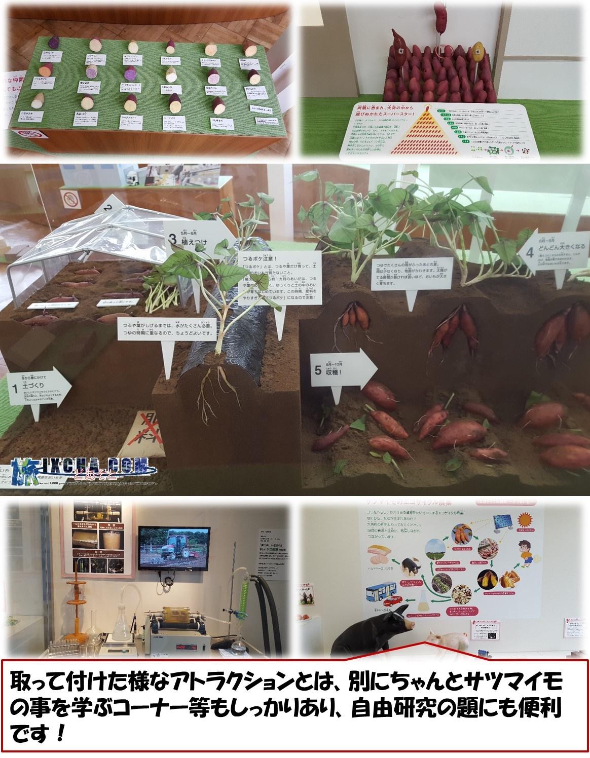 取って付けた様なアトラクションとは、別にちゃんとサツマイモの事を学ぶコーナー等もしっかりあり、自由研究の題にも便利です!