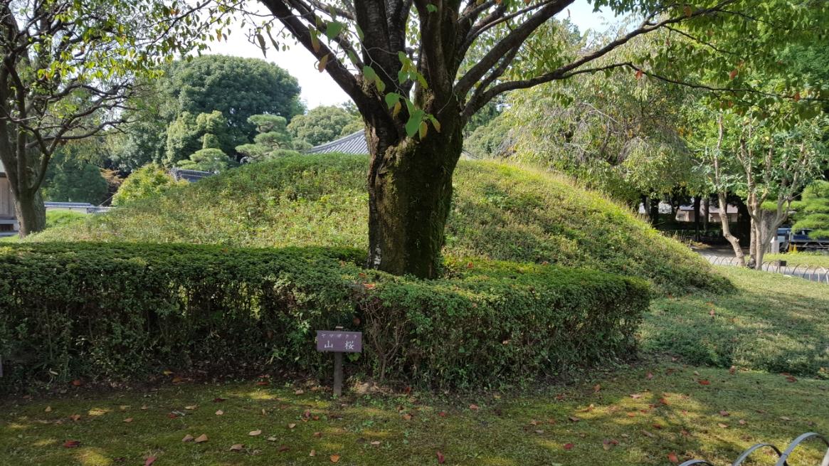 「方丈」、「庫裡」、「書院」の建物群の見学後、建物をぐるりと囲む庭の見学に向かいます。