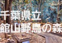 自然の生態を学ぶ事が出来る「千葉県立 館山野鳥の森」を徹底解説!
