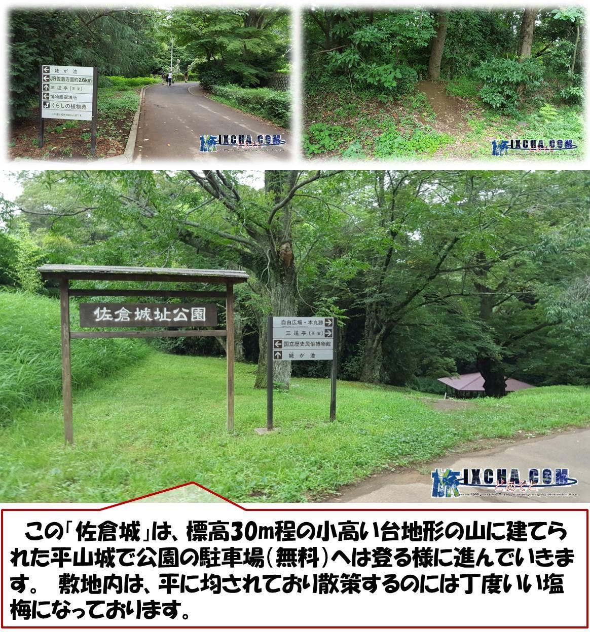 この「佐倉城」は、標高30m程の小高い台地形の山に建てられた平山城で公園の駐車場(無料)へは登る様に進んでいきます。 敷地内は、平に均されており散策するのには丁度いい塩梅になっております。