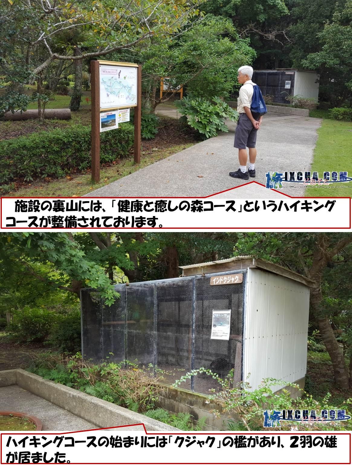 施設の裏山には、「健康と癒しの森コース」というハイキングコースが整備されております。 ハイキングコースの始まりには「クジャク」の檻があり、2羽の雄が居ました。