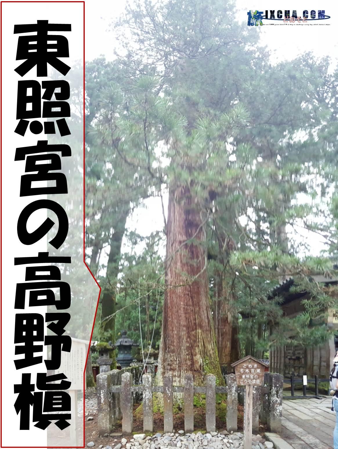 この巨木は「東照宮の高野槇」と名付けられた木で更に横には三猿で有名な「神厩舎」があります。 「東照宮の高野槇」は、樹齢370余年、高さ約39㍍ある巨木で三代将軍徳川家光公御手植えの樹として知られています。 ちなみに、「高野槇」って何だろう?って思う人も居るみたいなので、簡単にいうと植物名です。 チューリップとか、桜とかそういう名前の事です。 悠仁親王殿下の御印も「高野槇」とういうこともあり、前にある立札には「悠仁親王殿下御誕生を祝福し、お健やかな御成長を心からお祈り申し上げます。」と書かれていました。