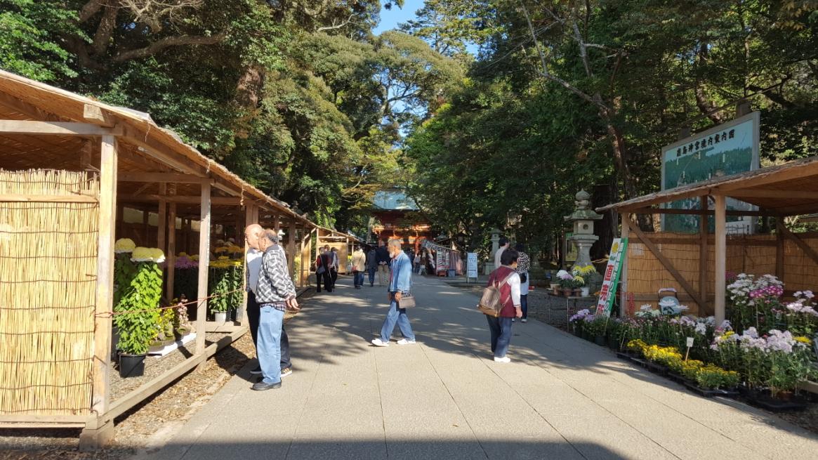 境内に入るとこの日は、「鹿島市菊花展」が行われており、丹精込めたであろう立派な菊が並べられていました。