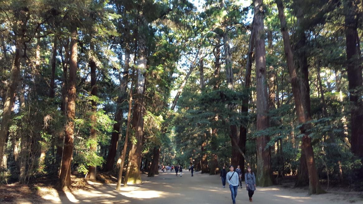 古代より神域として守られた森の木々は太く、神聖な雰囲気を感じる事が出来ます。