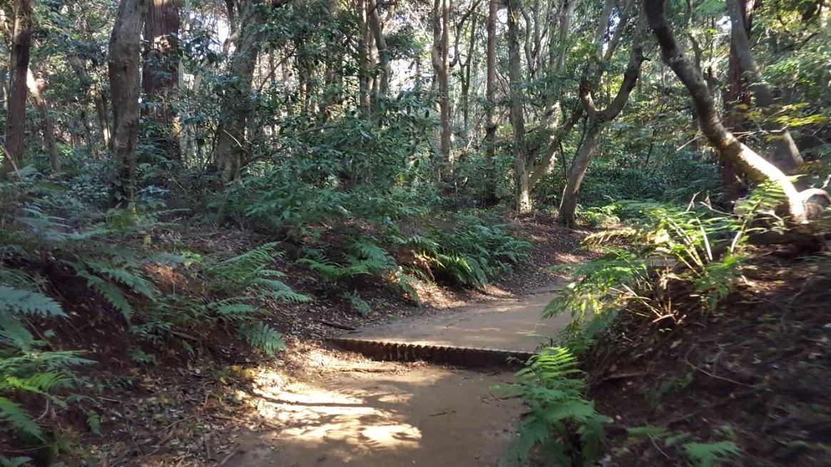 鬱蒼とした森の中に入って行きます。 道は多くの参拝客に踏み固められており歩きやすくなっています。