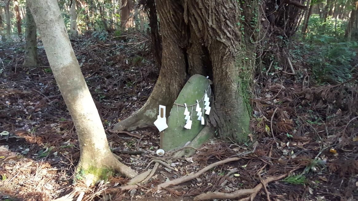 途中、森の中を観ると樹に飲み込まれた石が祀られていました。 周りには案内板等も無い為、どういった意味があるのかは不明ですが、たぶん未だ意味は無いと思います。 この石に意味が出るのは数百年後になるのかな??と勝手に想像しつつ写真をパシャリです。