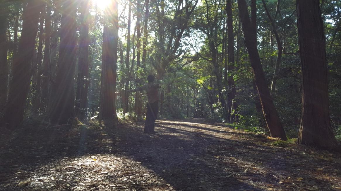 非常に森が深い為、マイナスイオンが溢れており散策が気持ちいいです!