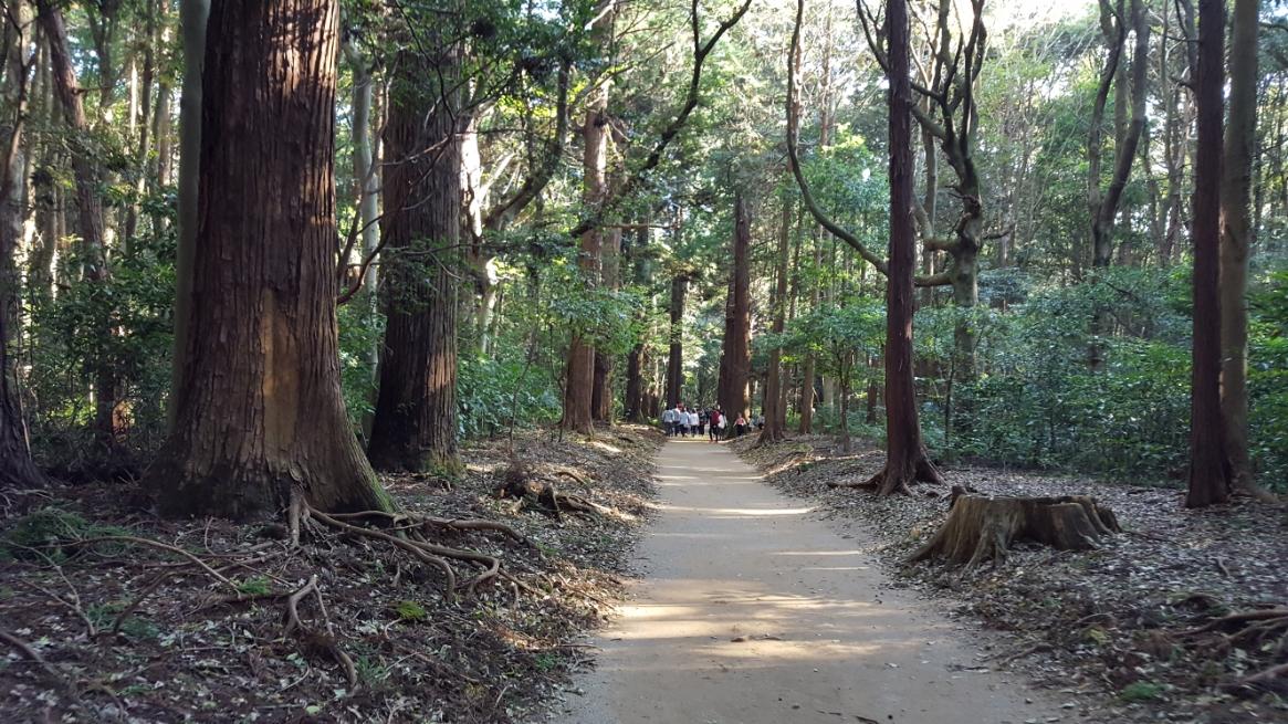 鹿島神宮の境内は広い為、一の鳥居から要石までは、結構距離があります。