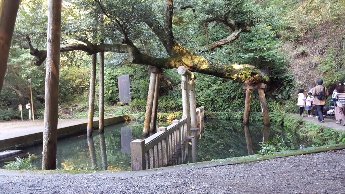 「御手洗池(みたらしいけ)」は、崖から豊富な湧水が流れ込んでおり底まで見える美しい水でした。 かつては、一の鳥居がある大船津から舟でこの地まで進み、潔斎をしてから神宮に参拝したと伝わる事から、池の名前もそれに由来されています。