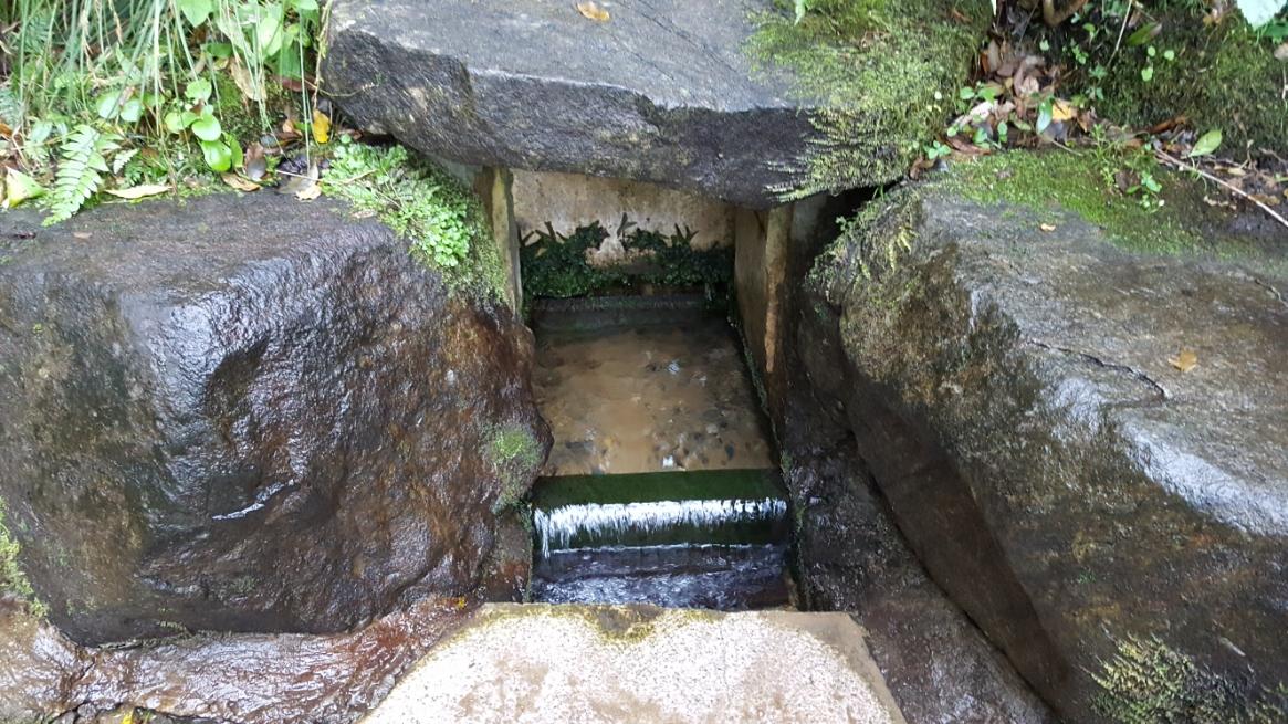 この豊富に湧く、湧き水が「御手洗池」に注がれています。