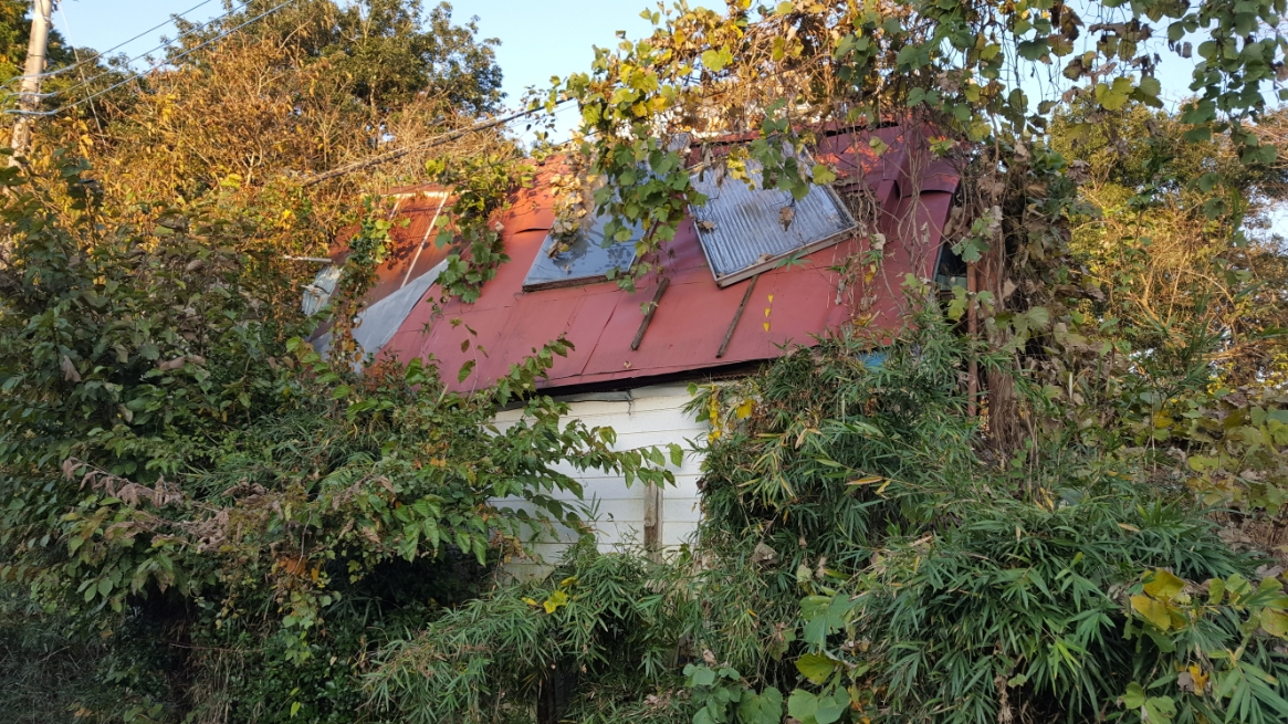 廃墟となって久しく、かつてこの場所が「竜宮城」だったと分かる痕跡も少なく、建造物は木々に飲み込まれつつありました。