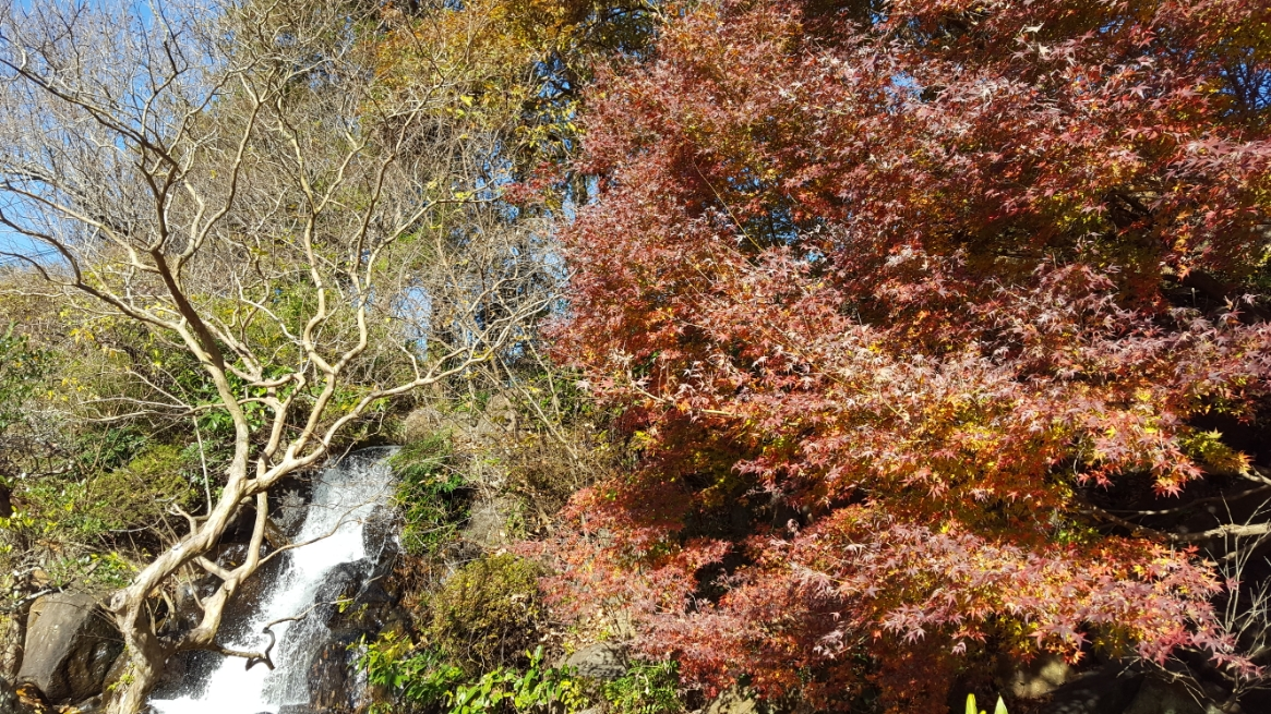 訪れたのが紅葉も終わった12月初旬の冬に差し掛かった時期でしたので、木々も美しくないですが秋に訪れるとさぞ美しかっただろうと思います。