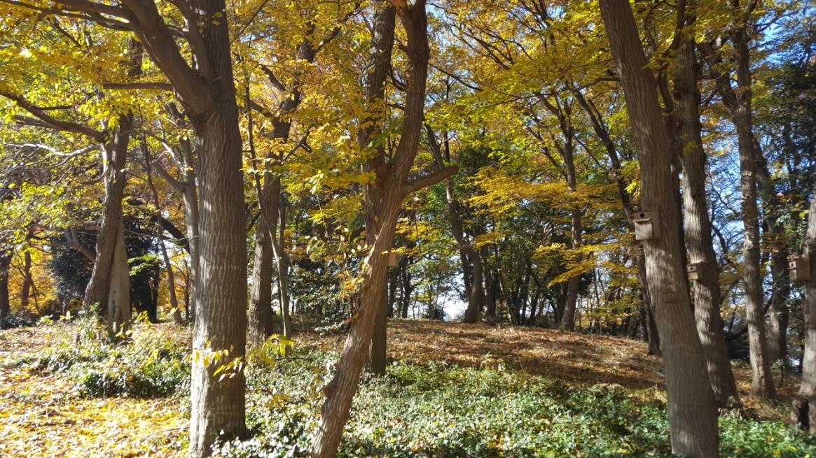 この雑木林は、秋になると紅葉が非常に綺麗です!