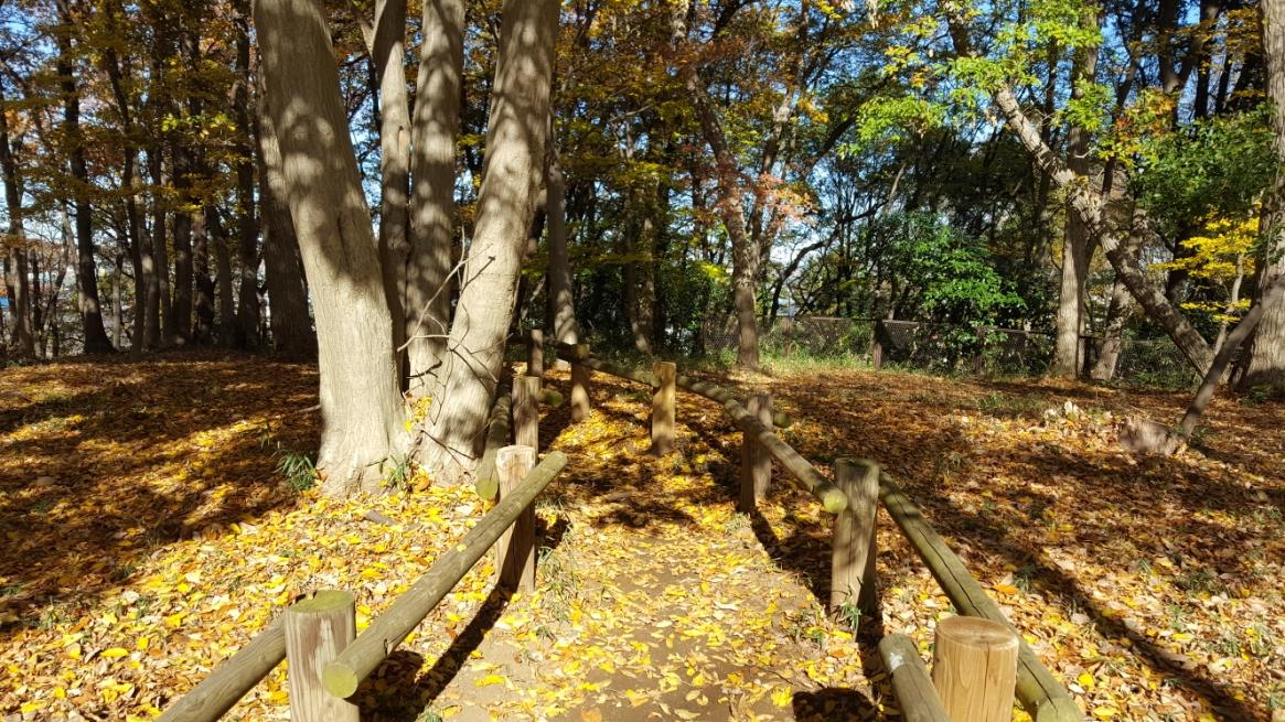 紅葉が美しい雑木林に入り、「妙音沢」へ進みます!