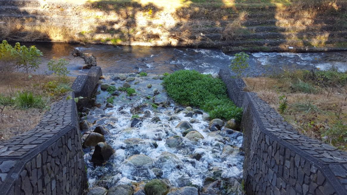 勿体なく感じちゃいますが、ココで湧いた水は全て黒目川に注ぎ込み、合流されていってしまいます。
