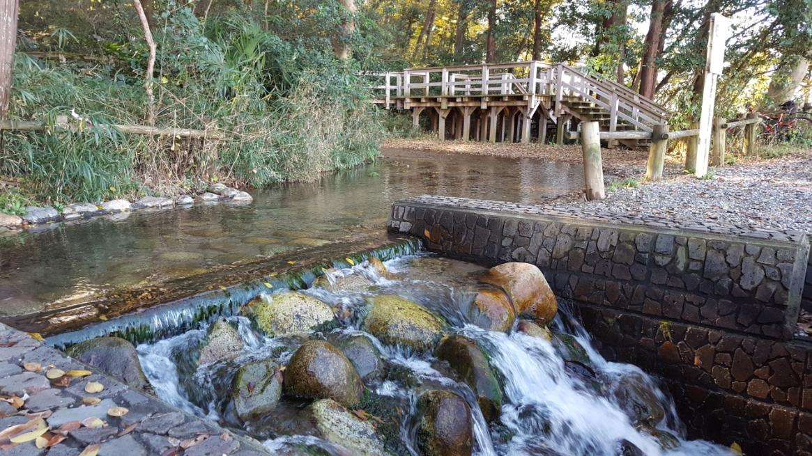 沢蟹等の多くの水生生物が生息している「妙音沢」は、湧き出る水量が毎分1000ℓと豊富です。
