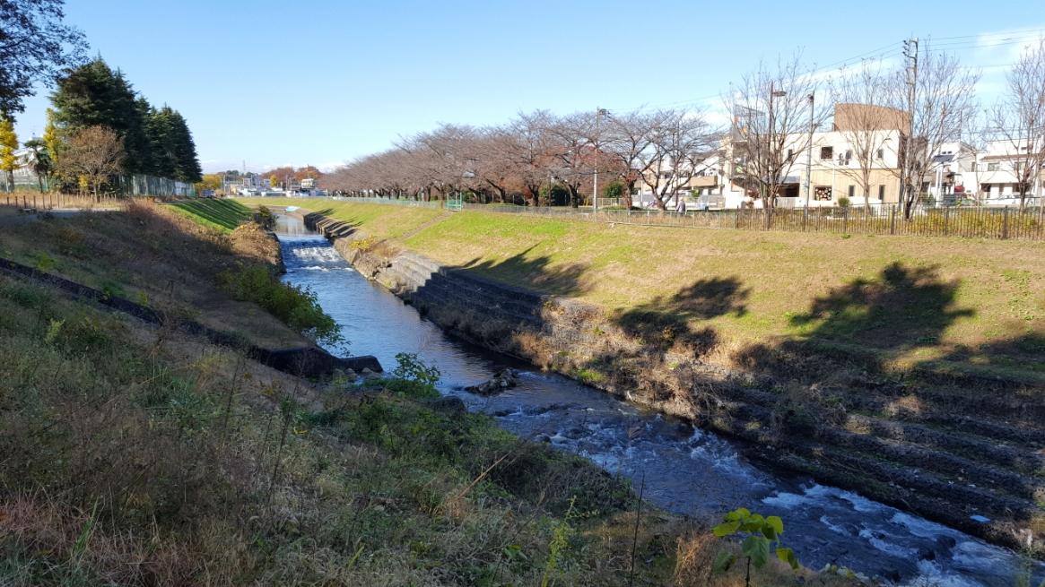 「妙音沢」の前には、黒目川が流れるています。