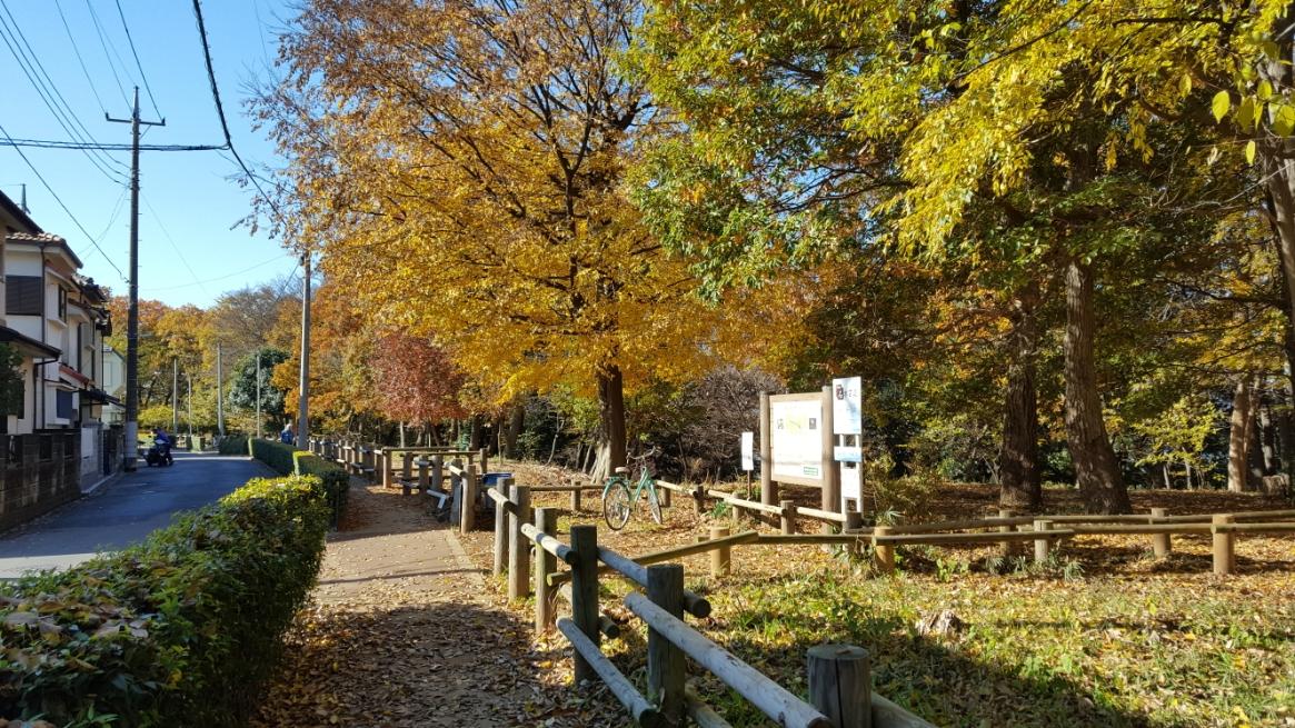 「妙音沢」へは、黒目川の河川敷からも訪れる事が出来ますが、今回は雑木林を抜けて向かう事にします。