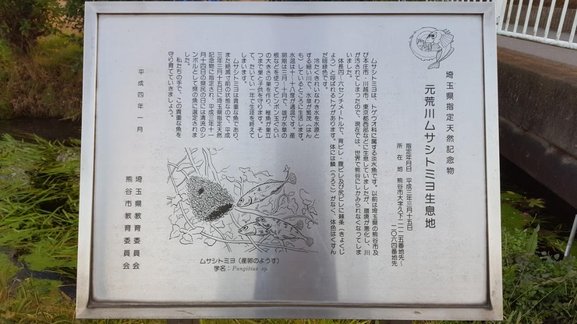 天然記念物に指定される「ムサシトミヨ」の生息地