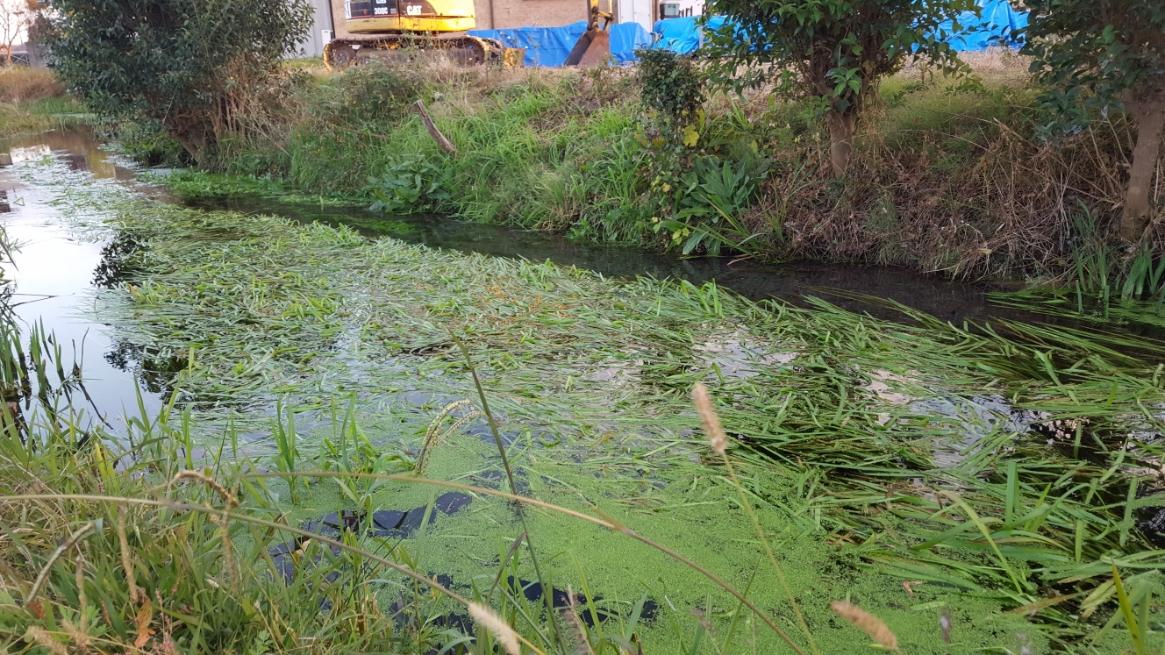 この元荒川は世界で唯一ムサシトミヨの生息が確認されているの河川で、1991年3月15日に埼玉県指定天然記念物に選定、2008年には、環境省から「平成の名水百選」に選定される貴重な河です。 その為、ポンプを使ってでも守らなければいけない水という事です。