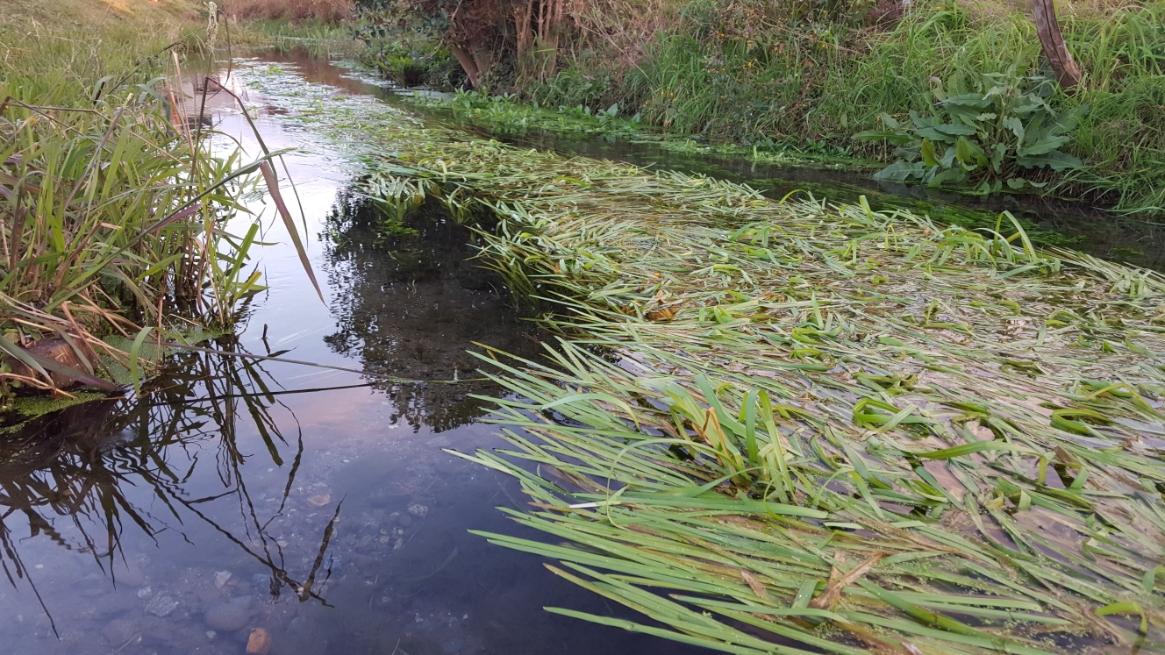 この元荒川(もとあらかわ)は、古荒川とも呼ばれ、その名のとおり、かつては荒川扇状地の湧水を水源とした荒川の本流でしたが、江戸時代に入間川に付けかえられ、荒川本流からは切り離されました。 現在は、開発などにより水源が枯渇した為、ポンプで地下水(人工水源)を1日7000tの汲み上げ、その水が水源となっております。 名水百選に選ばれるばしょなのにポンプを使って汲み上げていると知ると、少しがっかりな気持ちもします。