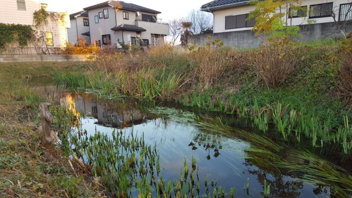 小さな河川に7000t/日という豊富な水量の為、川底にヘドロが溜まる事も無く、近づいても嫌な臭いもありません。 ただし、この川の水をダイレクトに飲めるかというとそれは無理です。 やはり、住宅街を通り抜ける小川という印象は決していいものでは無いですね!