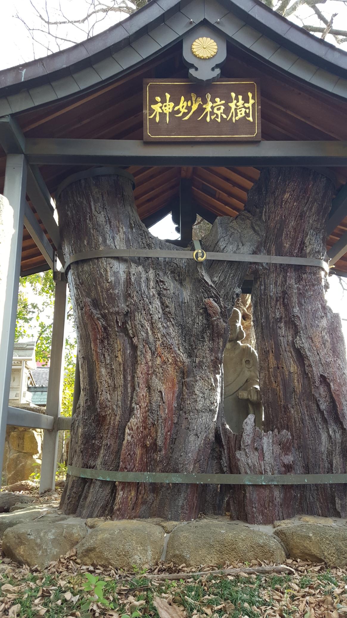 この「神妙椋樹」を近くで観ると、上記を再現した木の中の聖徳太子像を観る事が出来ます。