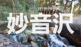平成の名水百選に選ばれた埼玉県新座市の「妙音沢」を徹底解説!!