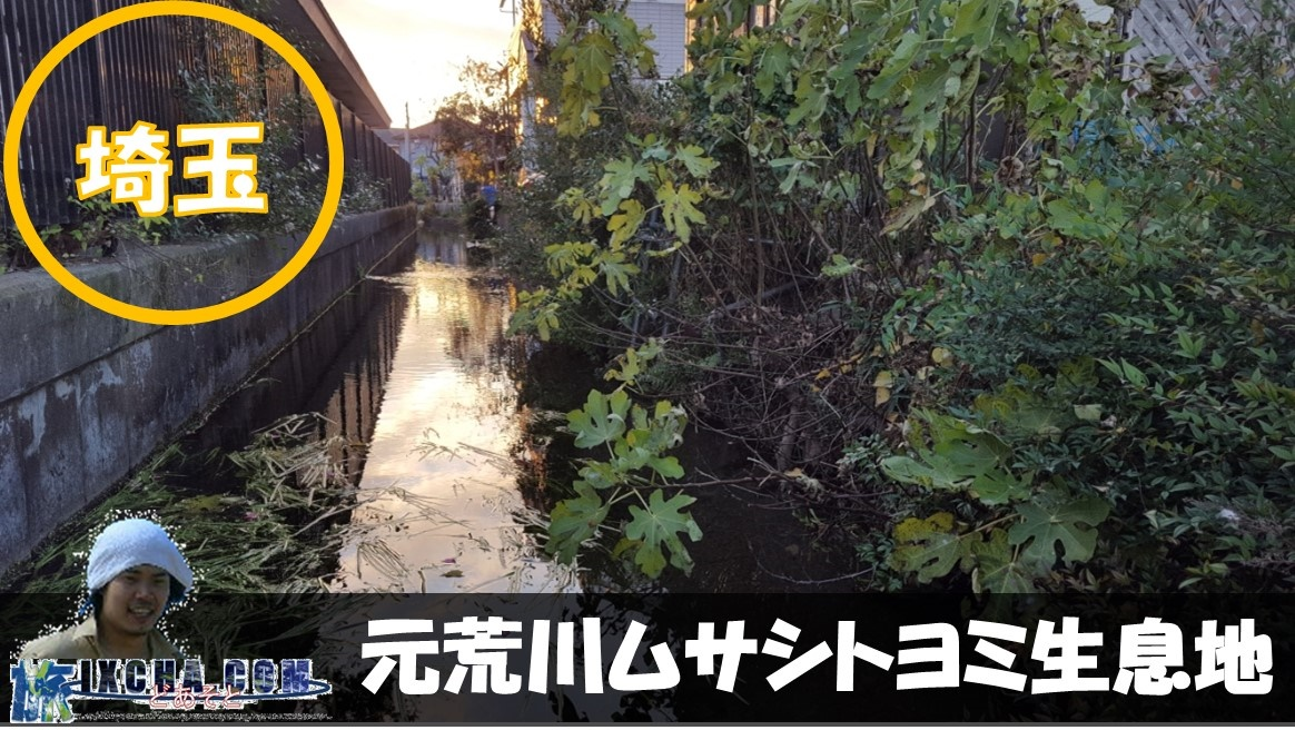 埼玉県熊谷市久下にある平成の名水百選に選ばれる「元荒川ムサシトヨミ生息地」にやってきました!! 名水百選に選ばれるとは、さぞかし美しい場所だろうやってきたのですが、住宅街の裏手を通る一見ドブ川の様な場所に驚愕しつつの見学です!