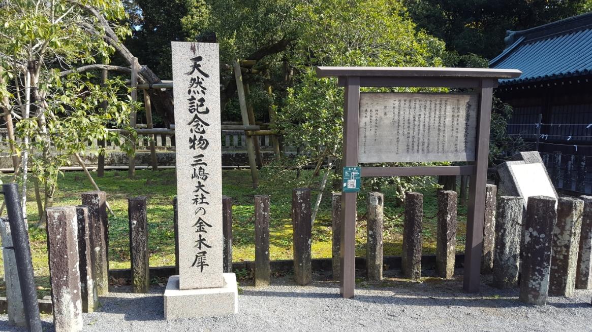 国の天然記念物に指定される金木犀