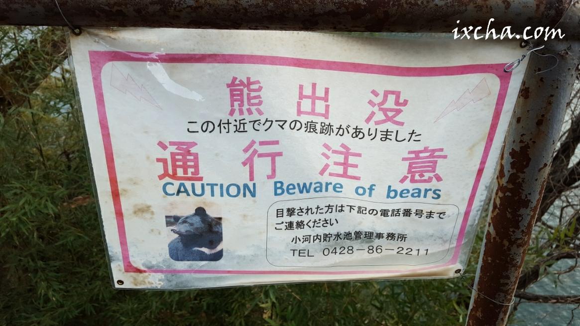 奥多摩湖の熊
