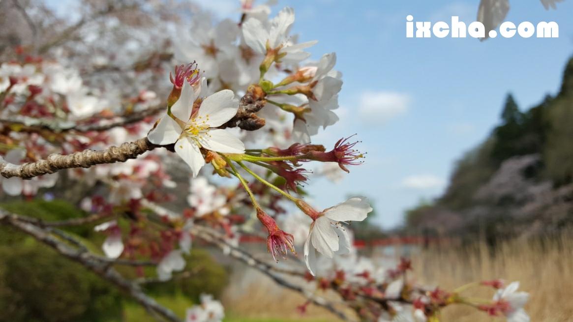 桜どあっぷ