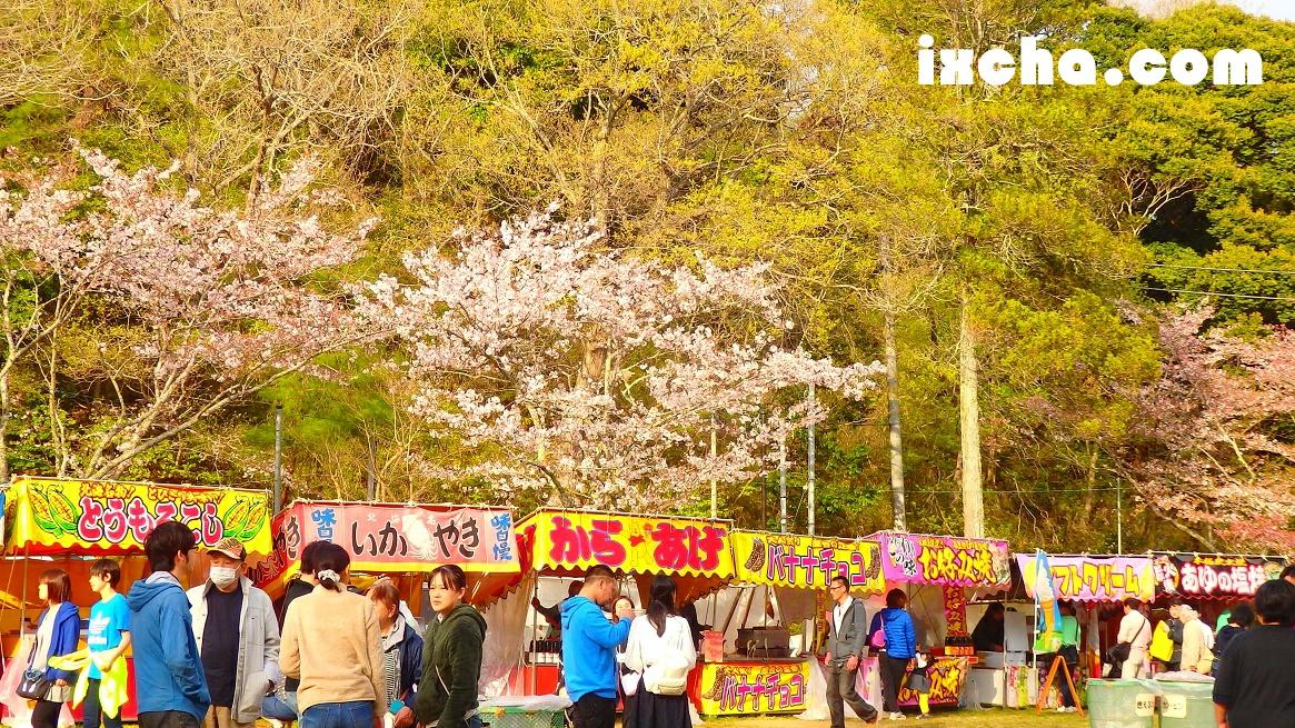茂原桜まつり