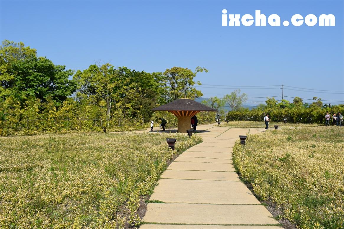 ラ・コリーナ への道