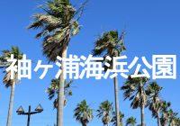 東京湾を一望できる南国ムード漂う『袖ヶ浦海浜公園』をドローンで空撮!