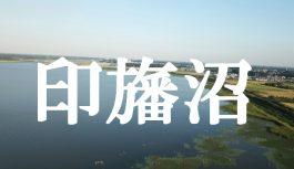 千葉県にある美しい日本最大の湖沼『印旛沼』をドローンで空撮してみた!